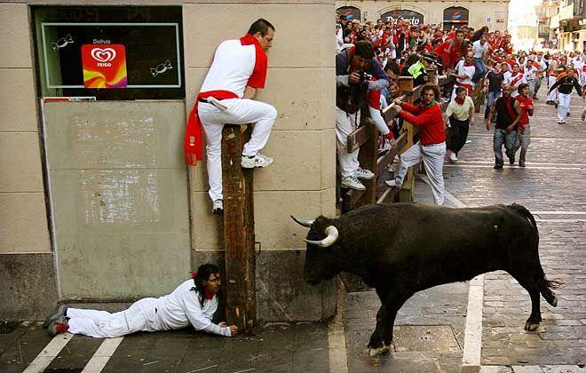 bulls[1]